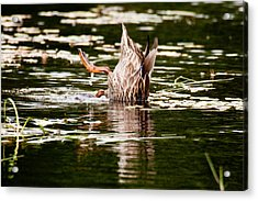 Acrylic Print featuring the photograph The Meaning Of Duck by Brent L Ander