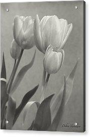 The Mirror Tulips Acrylic Print by Debra     Vatalaro