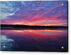 The Mystery Acrylic Print by Mitch Cat