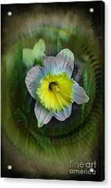 The Narcisstic Narcissus Acrylic Print by The Stone Age
