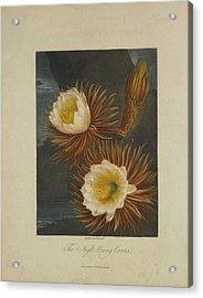 The Night-blooming Cereus Acrylic Print by Robert John Thornton