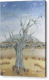 The Old Gum Tree Acrylic Print by Debra Piro