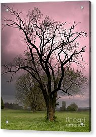 The Old Tree Acrylic Print by Brian Stamm