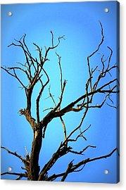 The Old Tree Acrylic Print by Mara Barova