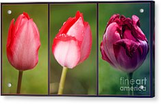 The One And Only Acrylic Print by Jutta Maria Pusl