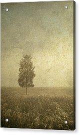 The One Acrylic Print by Jenny Rainbow