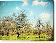 The Orchard Acrylic Print by Darren Fisher