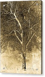 The Orchard Way Acrylic Print by Ron Jones