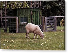 Acrylic Print featuring the photograph The Original Lawn Mower by Trever Miller