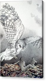 The Owl Of Athena Acrylic Print