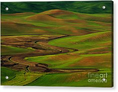 The Palouse Acrylic Print by Beve Brown-Clark Photography