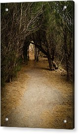 The Path Acrylic Print by Robert Martin