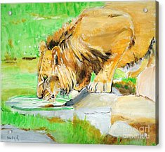 The Paws That Refreshes Acrylic Print by Judy Kay