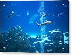 The Peaceable Underwater Kingdom Acrylic Print
