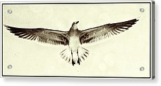 Acrylic Print featuring the photograph The Perfect Wing by Jim Moore