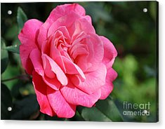 Acrylic Print featuring the photograph The Pink Rose by Fotosas Photography