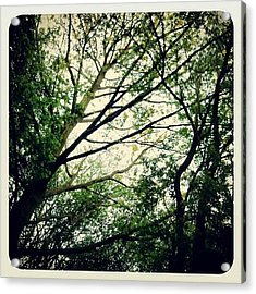 The Planet's Lungs #trees #british Acrylic Print