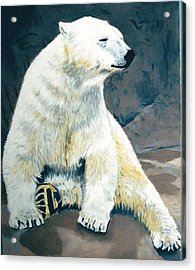The Polar Bear Acrylic Print by Terry Forrest