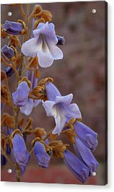 Acrylic Print featuring the photograph The Princess Flower by Paul Mashburn