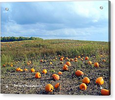 The Pumpkin Patch Acrylic Print