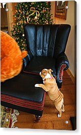Acrylic Print featuring the photograph The Puppy Chase by Ann Murphy