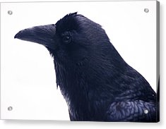 The Raven.  A Study In Black And White Acrylic Print
