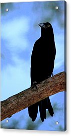 The Raven Acrylic Print by Lisa Scott