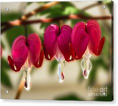 The Red Heart Acrylic Print by Robert Bales