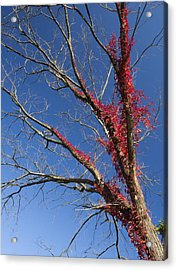 Acrylic Print featuring the photograph The Red Tree by Nick Mares