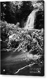the river at the Gleno or Glenoe Waterfall beauty spot county antrim Acrylic Print by Joe Fox