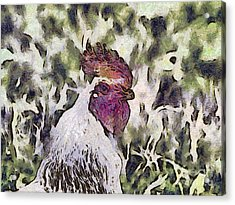 The Rooster Portrait Acrylic Print by Odon Czintos