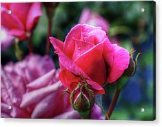 The Rose Acrylic Print by Matthew Green