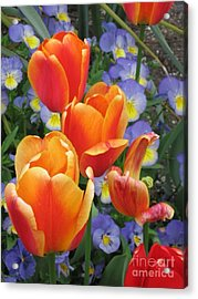The Secret Life Of Tulips - 2 Acrylic Print by Rory Sagner