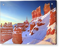 The Sentinal Bryce Canyon Acrylic Print by (C) Rob Little