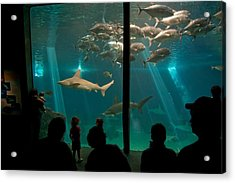 The Shark Tank Acrylic Print