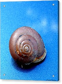The Shell Of A Snail Acrylic Print