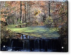 Acrylic Print featuring the photograph The Side Of The Road by Kelly Reber