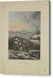 The Snowdrop Acrylic Print by Robert John Thornton