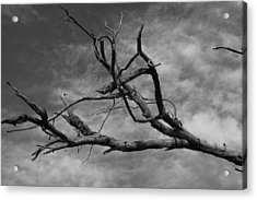 The Spectre Of Drought Acrylic Print by David Rizzo
