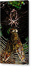 The Spider And The Fly In Abstract Acrylic Print by Wingsdomain Art and Photography