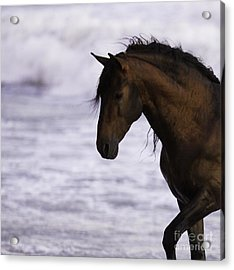 The Stallion And The Ocean Acrylic Print by Carol Walker