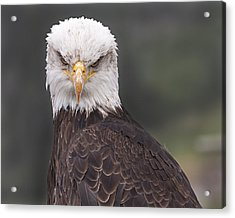 Acrylic Print featuring the photograph The Stare by Eunice Gibb