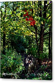The Start Of Fall Color Acrylic Print by Ruth Bodycott