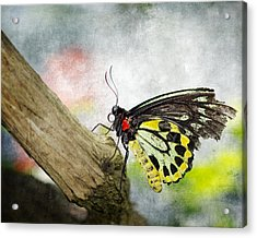 The Stillness Of A Butterfly Acrylic Print by Laura George