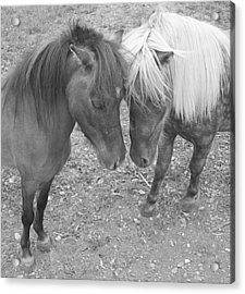 The Studs Acrylic Print by Heather  Boyd