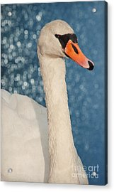 The Swan Acrylic Print by Angela Doelling AD DESIGN Photo and PhotoArt