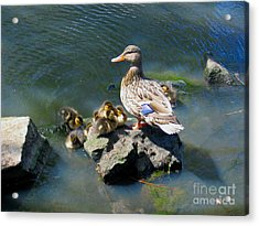 The Swimming Lesson Acrylic Print by Rory Sagner