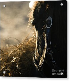 The Taste Of Fresh Hay  Acrylic Print by Angel  Tarantella