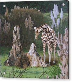 The Termite Mounds Acrylic Print by Sandra Chase