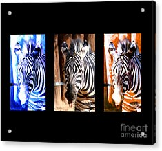Acrylic Print featuring the photograph The Three Zebras Black Borders by Rebecca Margraf